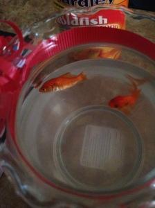fishbowl2